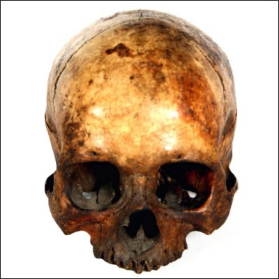 Dayak human trophy skull
